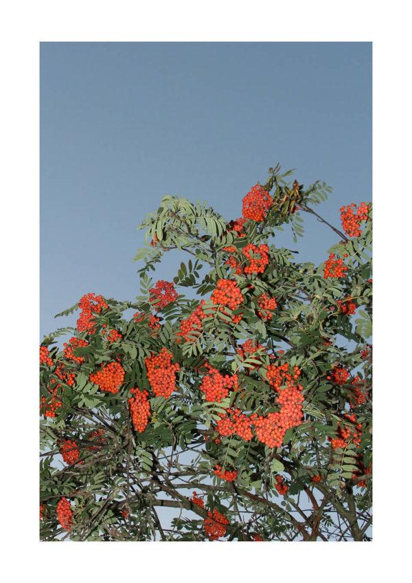 Meike Männel: Paradise #13, 2020, AM 29,7 x 42 cm, IM 24 x 36 cm, Photography / Fine Art Print on 305 gsm Paper, matte