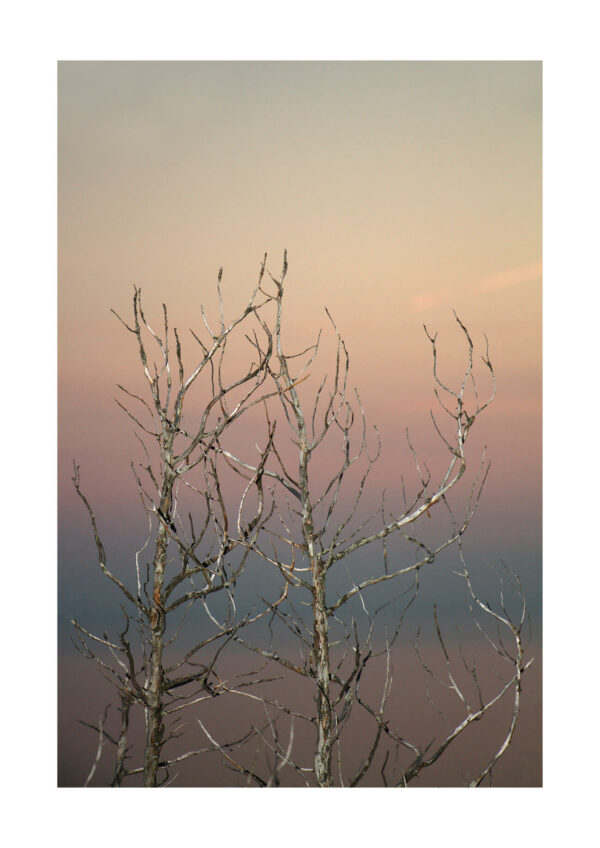 Meike Männel: Paradise #4, 2017, AM 29,7 x 42 cm, IM 24 x 36 cm